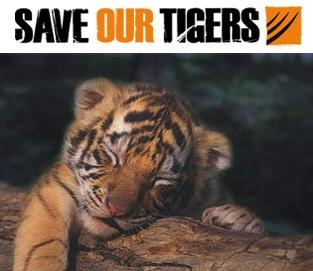 Save The Tigers - MANAVITES